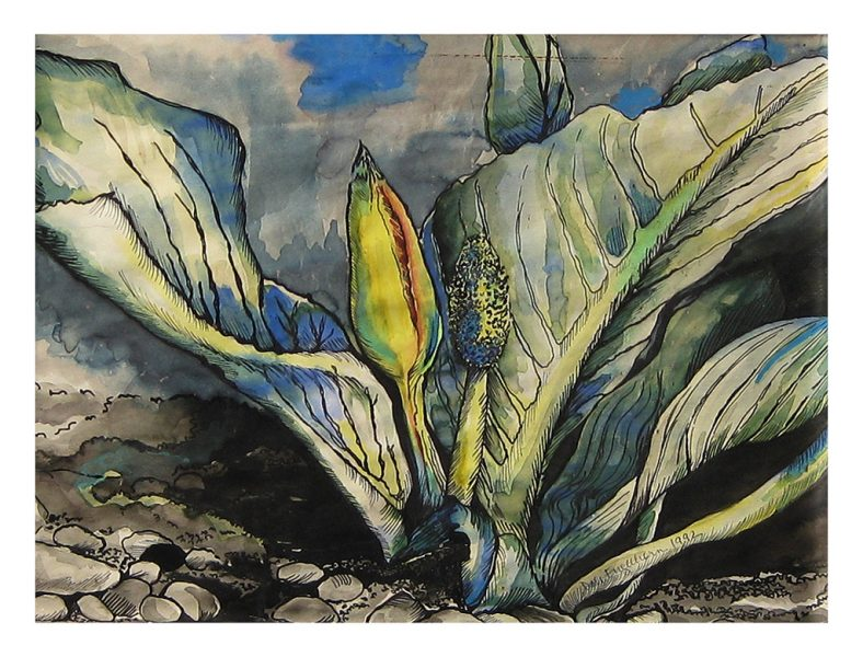 "Skunk Cabbage - 15 x 11"", Water Color and Ink on 50# Water Color Paper, 1989"